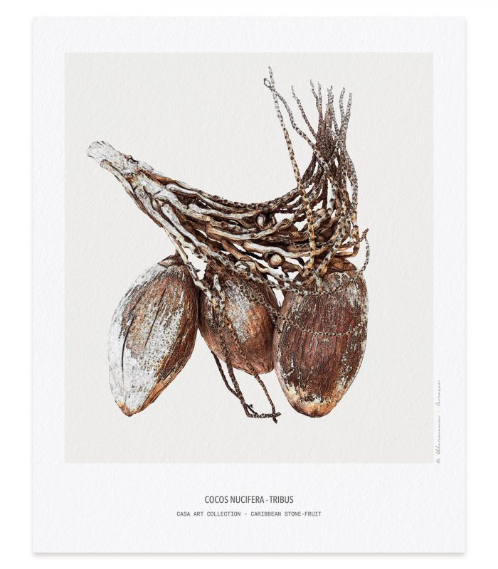 Caribbean art - Fine Art Printing - Caribbean Stone Fruit Collection - Kunst aan de muur. Aquarelle