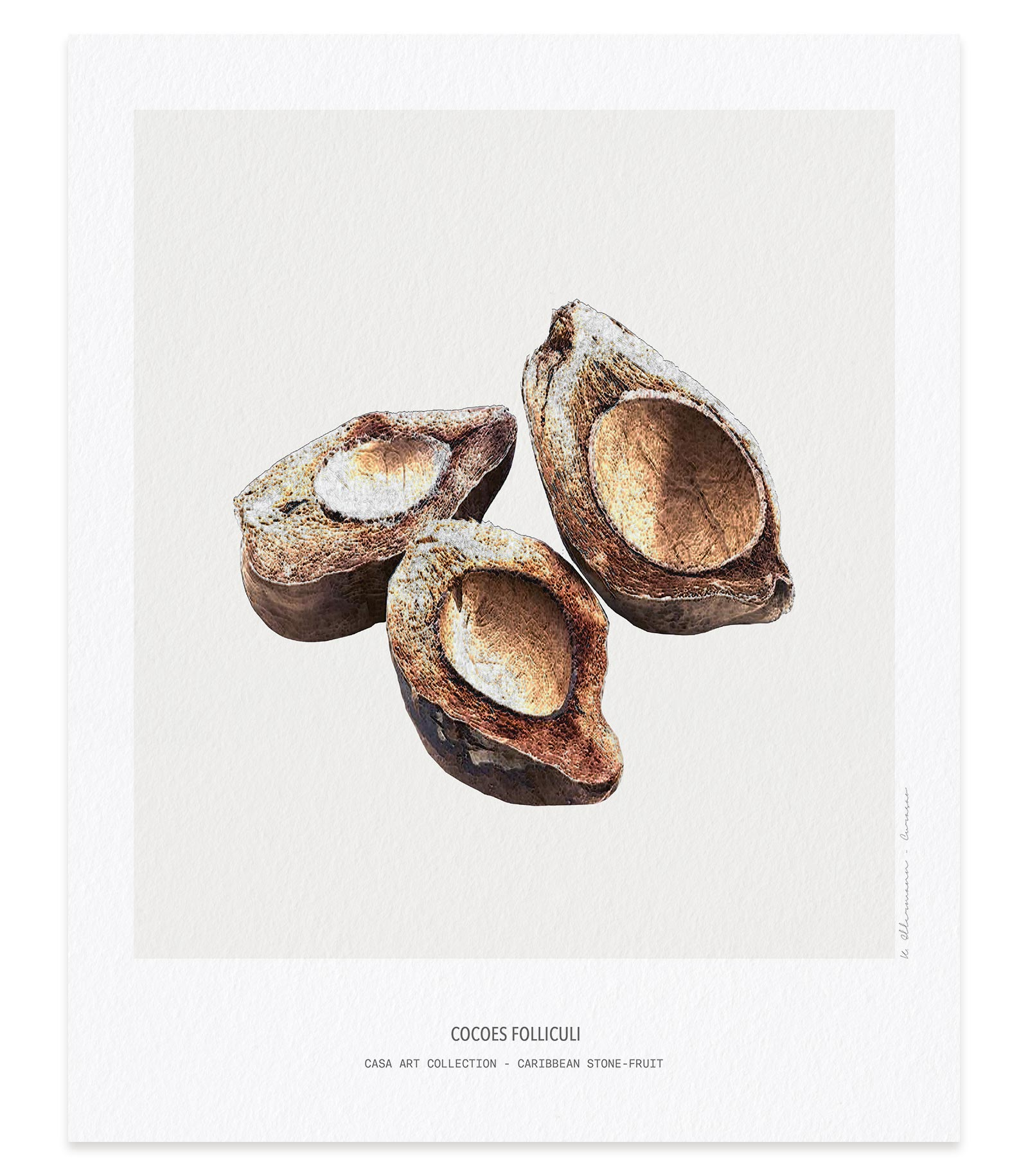 Cocoes folliculi - Casa Art Collection