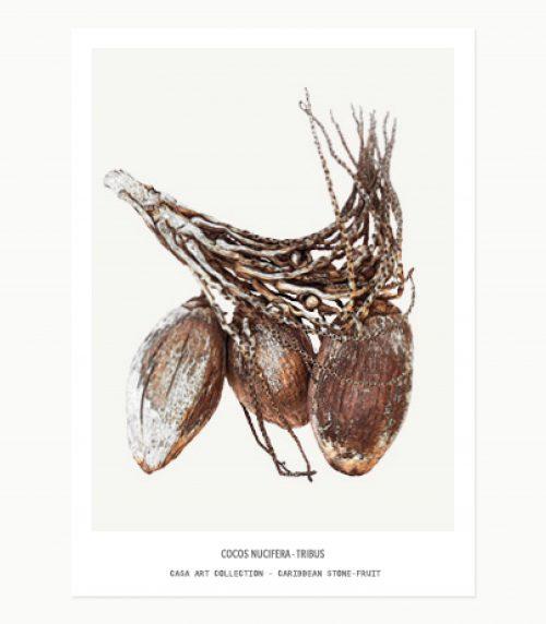 Caribbean Stone-fruit - minicards _Birds