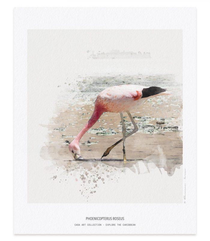 Caribbean Flamingo Art