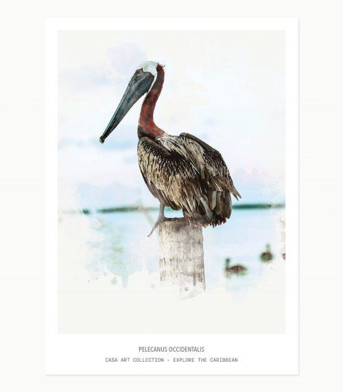 Explore the Caribbean - minicards _Birds